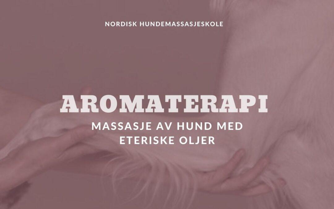 Aromaterapi – Massasje av hund med eteriske oljer