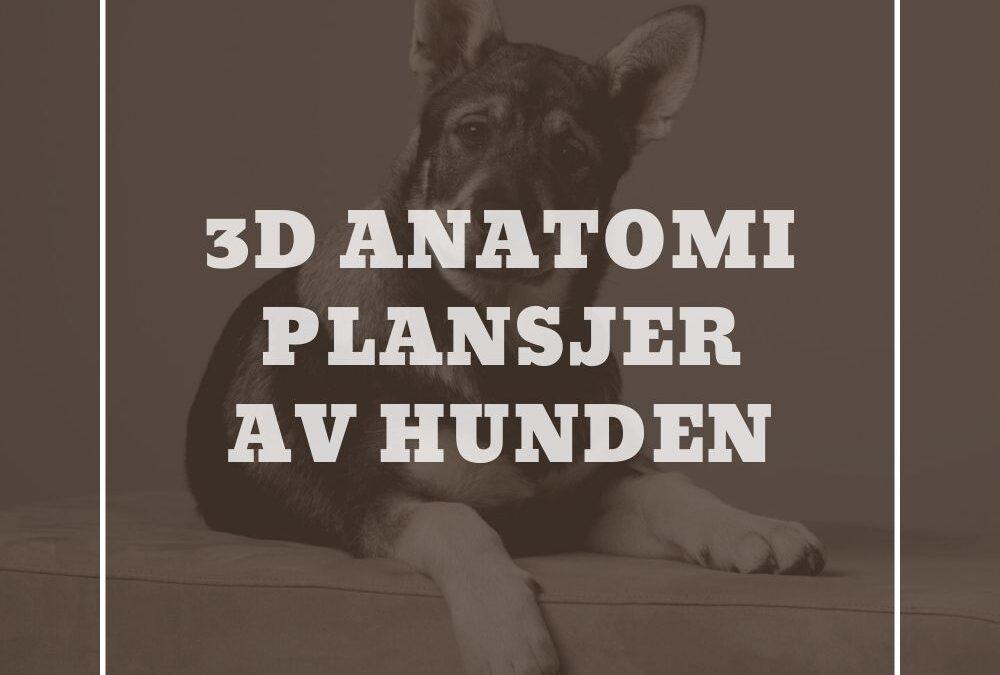 3D Anatomi plansjer